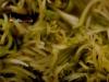 degustazione-slow-food-pomigliano-jazz-festival-chef-a-casa-vostra-michela-iaccarino-179