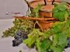 degustazione-slow-food-pomigliano-jazz-festival-chef-a-casa-vostra-michela-iaccarino-20