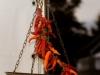 degustazione-slow-food-pomigliano-jazz-festival-chef-a-casa-vostra-michela-iaccarino-33
