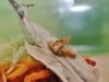degustazione-slow-food-pomigliano-jazz-festival-chef-a-casa-vostra-michela-iaccarino-52