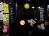 pummarock-fest-2012-10