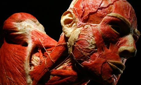 von-hagens-body-worlds-006-1403121838120