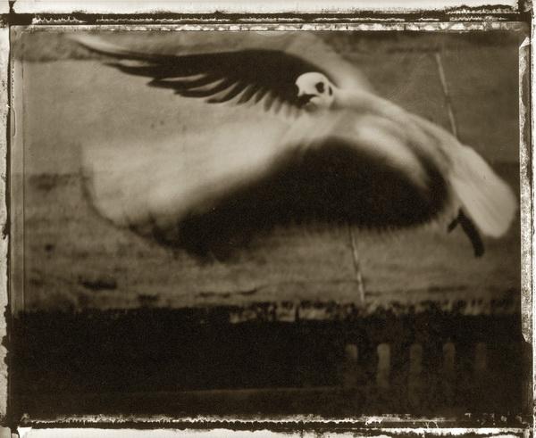 2. Il gabbiano - Sarah Moon
